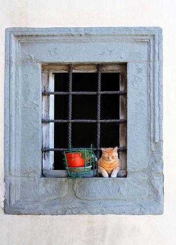 The Cat in the Window by John Schneider. Seen in Cortona, Italy