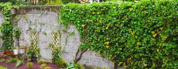 Découvrez comment bien garnir vos murs, tonnelles et pergolas avec les plantes grimpantes ? Et vous, quels types de plantes grimpantes préférez-vous pour vos extérieurs ? #PlantesGrimpantes #JardiniersProfessionnels