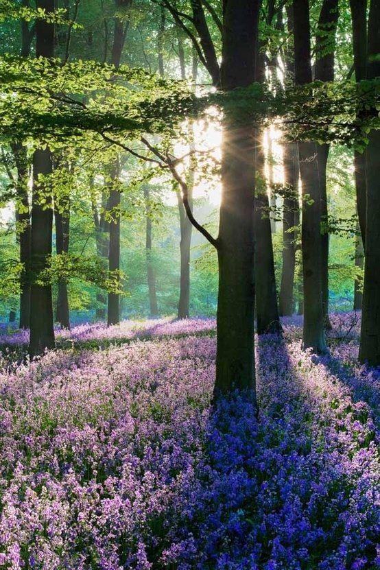 Spring woods. Violet floor. Emerald green ceiling, light in between.