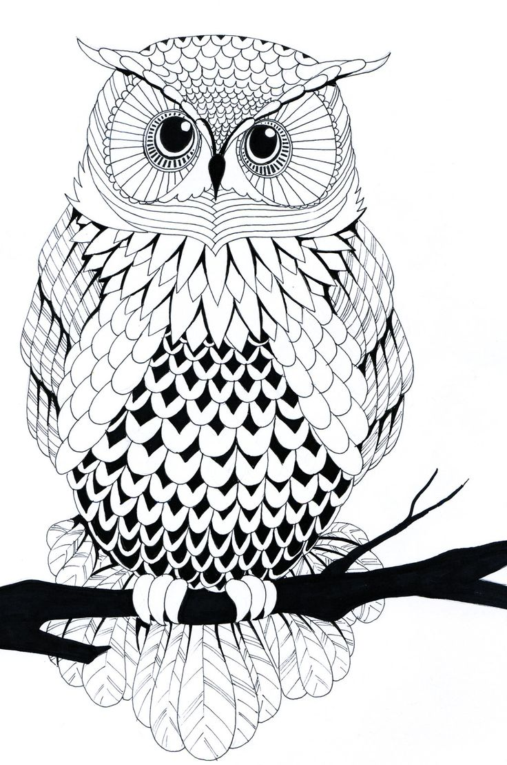 34 best owl tattoo coloring sheets images on pinterest coloring
