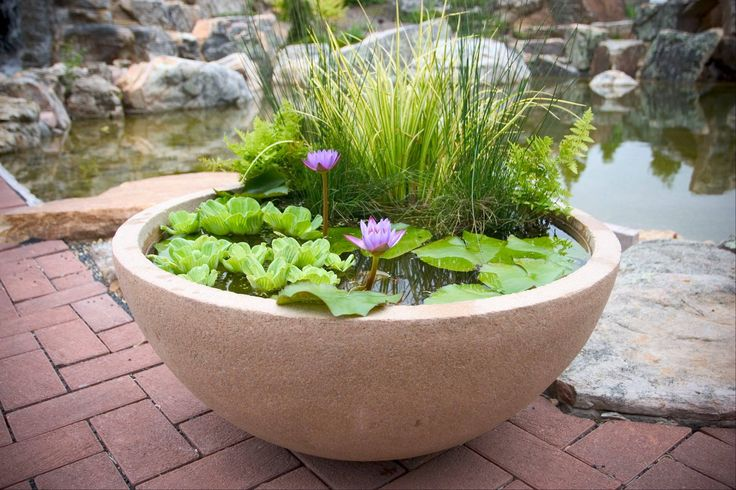 Aqua bowls, made of a resin that looks like stone, can hold water, along with water lilies, fish, tadpoles, snails or turtles.