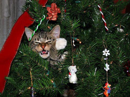 1000+ Images About O Christmas Tree, O Christmas Tree
