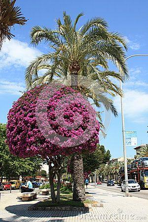 View of the pedestrian zone along the Avenue Gabriel Roca. Palma de Mallorca. Mallorca, Spain