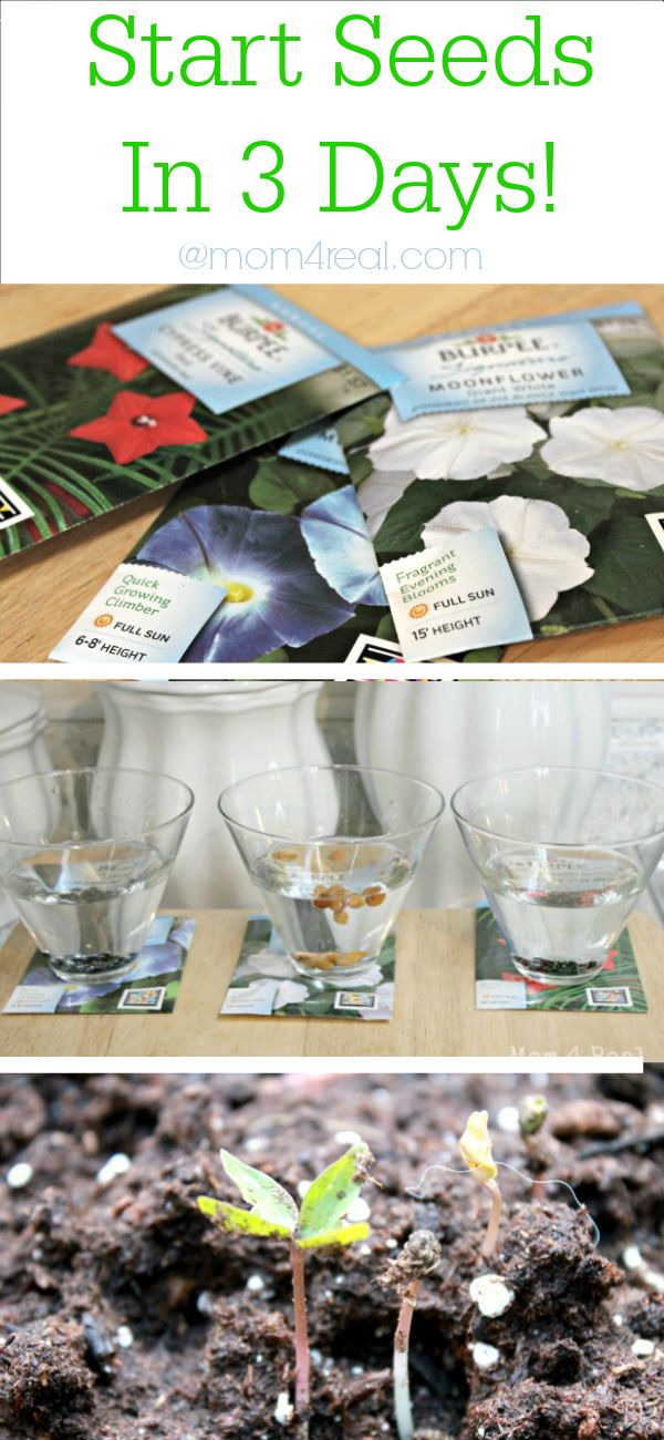 Gardening Tip - Start Seeds in 3 Days at Mom 4 Real @Jess Pearl Liu Kielman {Mom 4 Real}