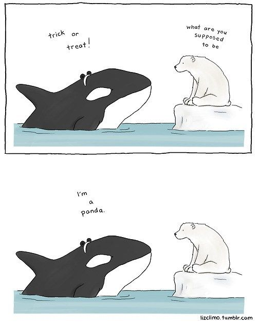 What Does an Orca Dress Up as For Halloween?