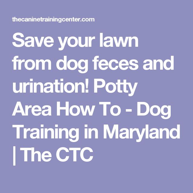 Save your lawn from dog feces and urination! Potty Area How To - Dog Training in Maryland | The CTC