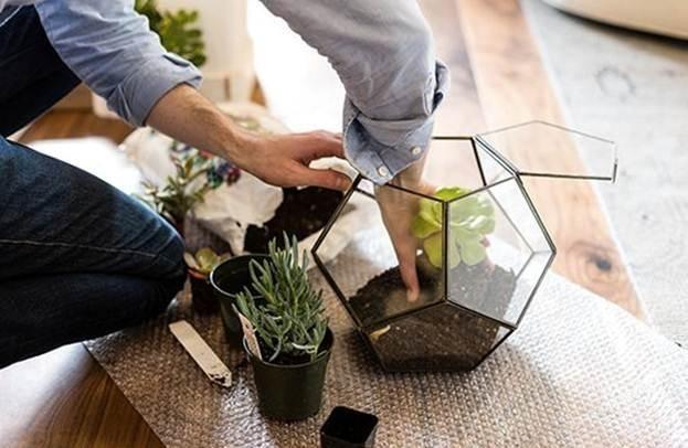 Уход за кактусами и суккулентами
