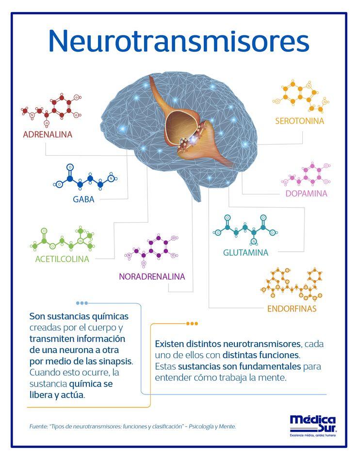 Sabes Que Son Y Para Que Sirven Los Neurotransmisores Descubre Las Curiosidades De Tu Cuerpo Neurolog Psicobiologia Neurociencia Y Educacion Neurociencia