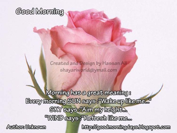 Good Morning Quotes For Someone Special: 265 Best Images About Good Morning.:) On Pinterest