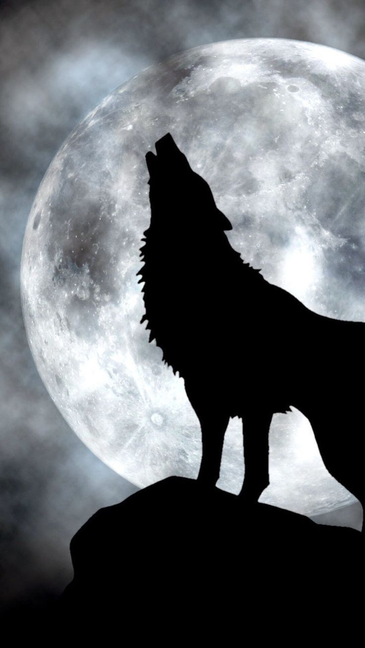 Hd Phone Wallpapers In 2020 Wolf Artwork Wolf Wallpaper Wolf Painting