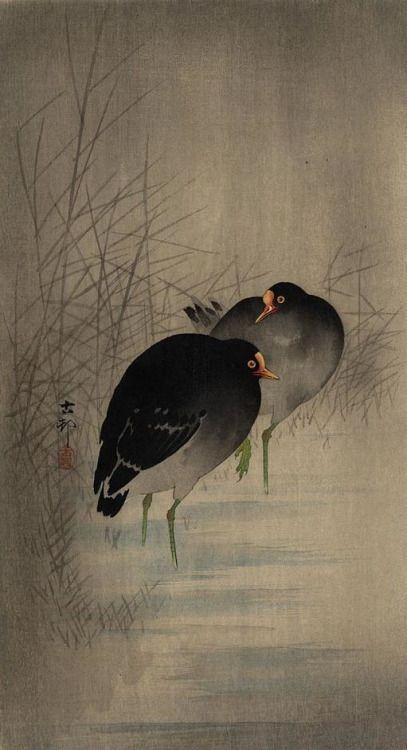 "rickstevensart: ""Ohara Koson (1877-1945) | 1910s | Two Gallinules in shallow water between reeds """