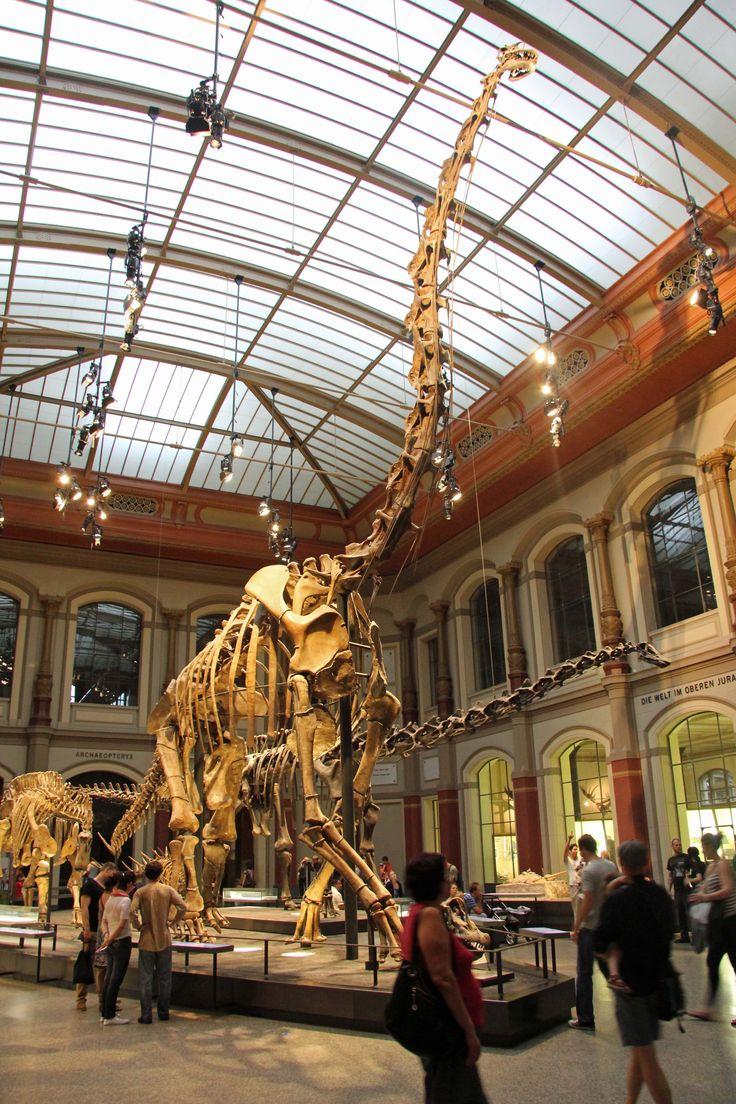 Museum für Naturkunde (10.02.2013)
