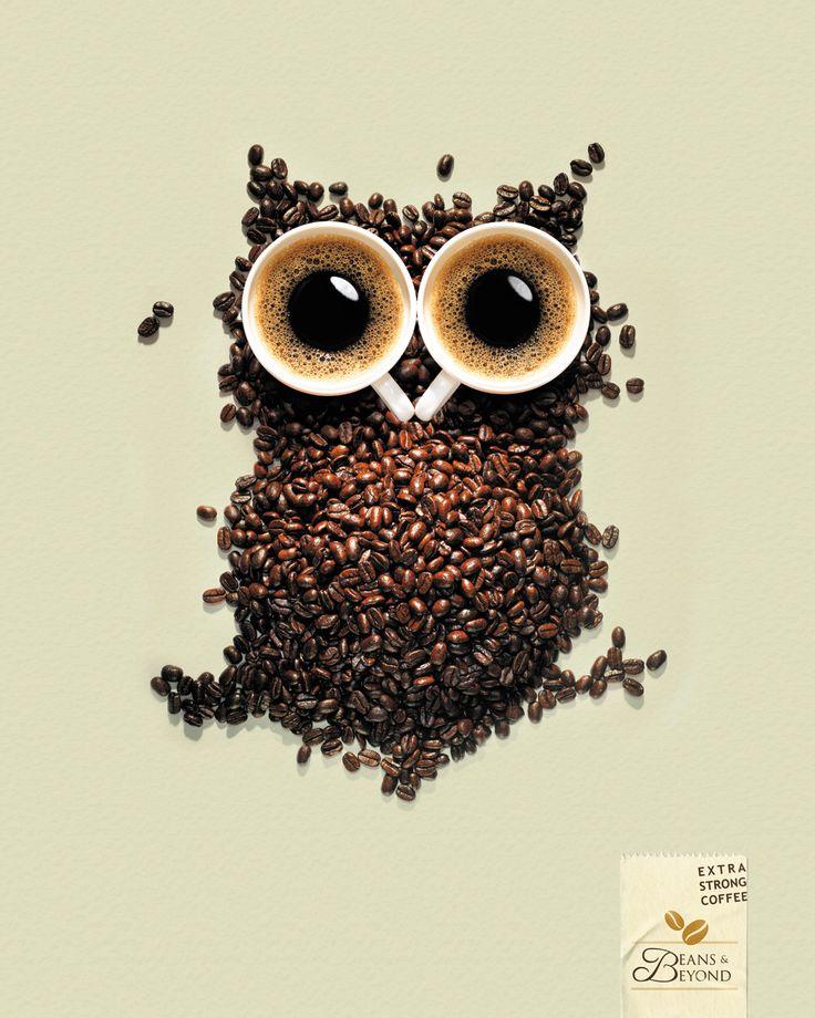 Un hiboux en café