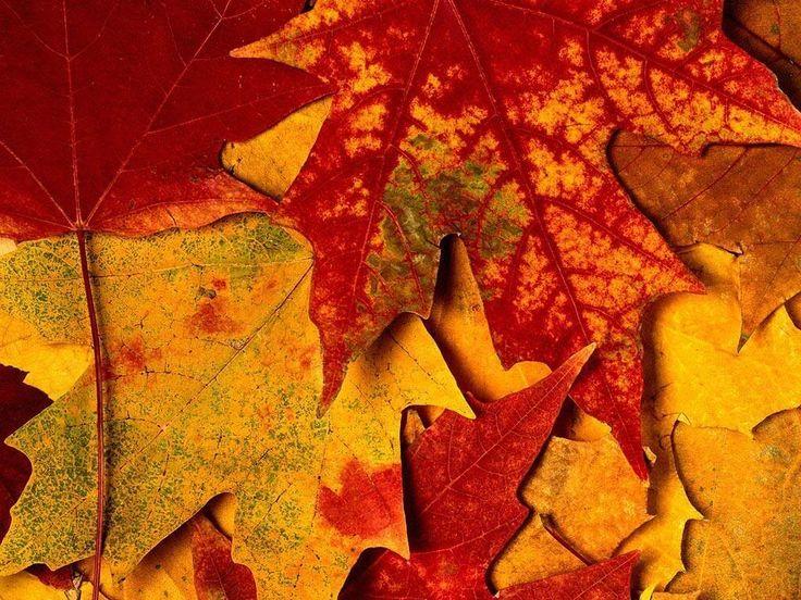 Autumn Orange Color Leaves HDWallpaperFX