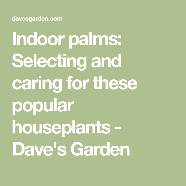 86 amazing modern beach house designs indoor palms selecting and caring for these popular houseplants