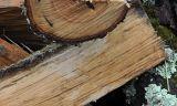 Comparatif cheminée, poêle à bois, insert et poêle granulés de bois