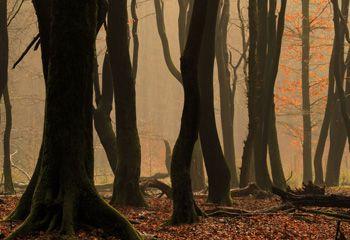 Wandeltips van een natuurfotograaf
