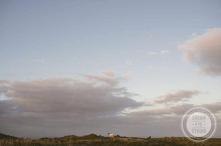 #dreameyestudio #horse #sky #freedom #ireland