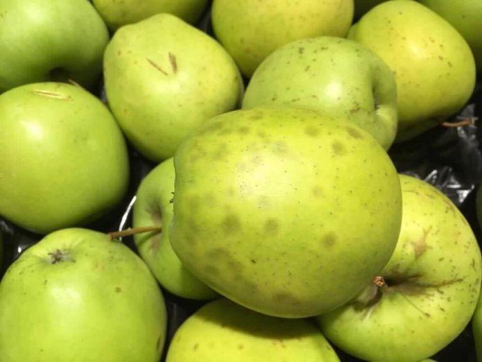 """Ďalší zákazník zažil v Bille šok. Slovákov varuje: """"Toto ovocie v žiadnom prípade nekupujte""""!"""