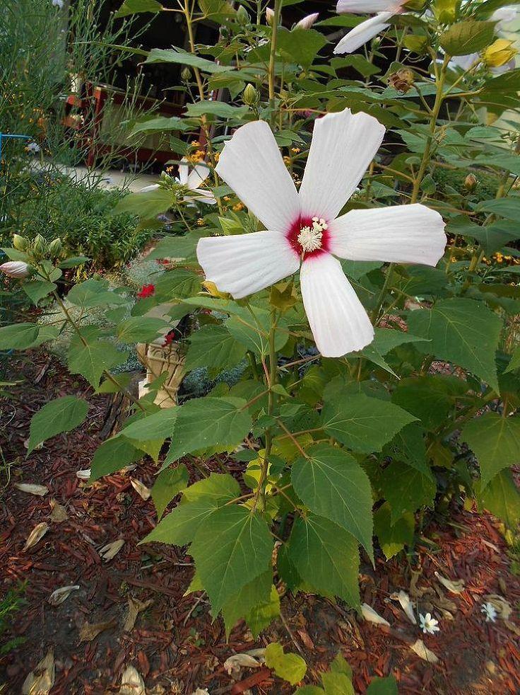 Flower Garden Ideas In Michigan 90 best flowers and plants in my secret garden images on pinterest
