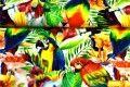 Dresówka pętelka papugi
