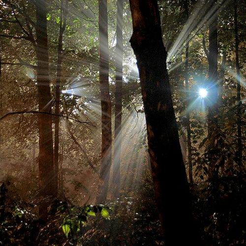 Photo: Natural Night Light Beams by ViaMoi, via Flickr (shared via Twitter by Bartlett Tree Experts)