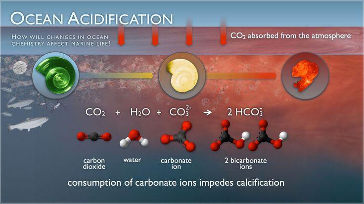 Detail of chemistry behind ocean acidification.