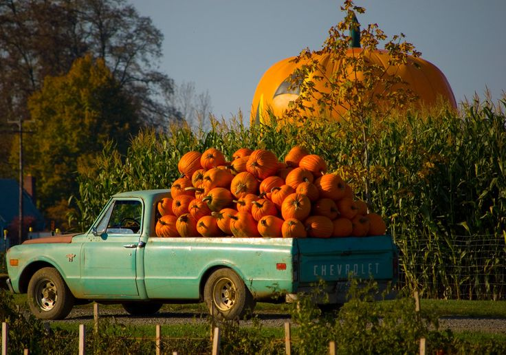 i don't know what it is about old farm trucks. especially when full of pumpkins