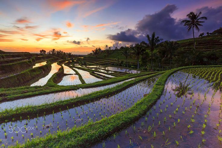 Jatiluwih Rice Field by Yudik Pradnyana on 500px