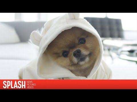 Cutest Dog In The World Guinness 2016 best 20+ guinness world records 2015 ideas on pinterest   weird