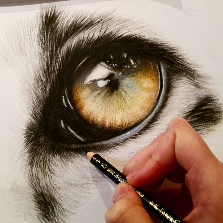 "Working on a close up of a Snow leopards eye. 12x16"" Polychromos colour pencils…"