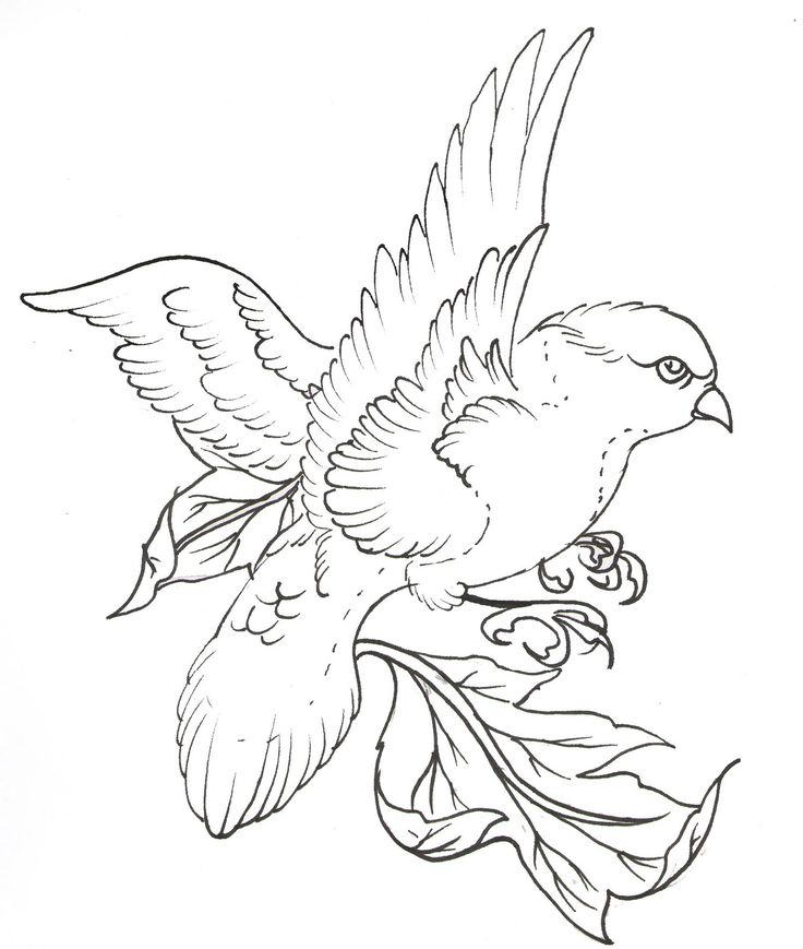 Line Drawing Of Animals And Birds : Best birds for embroidery images on pinterest