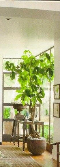 indoor tree bring the garden indoors during the long winters