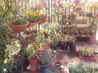 15 best images about planta de exterior on pinterest - Plantas para exterior ...