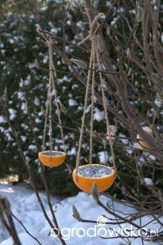 Karmniki dla ptaków - strona 5 - Forum ogrodnicze - Ogrodowisko