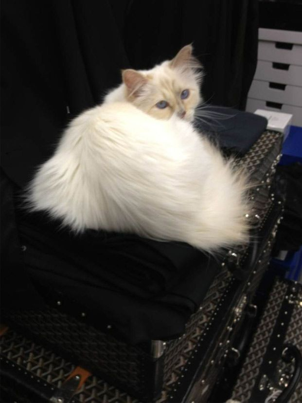 Blue eyed white cat, the famous one, on pile of clothes, which can be risky hairwise... ;)