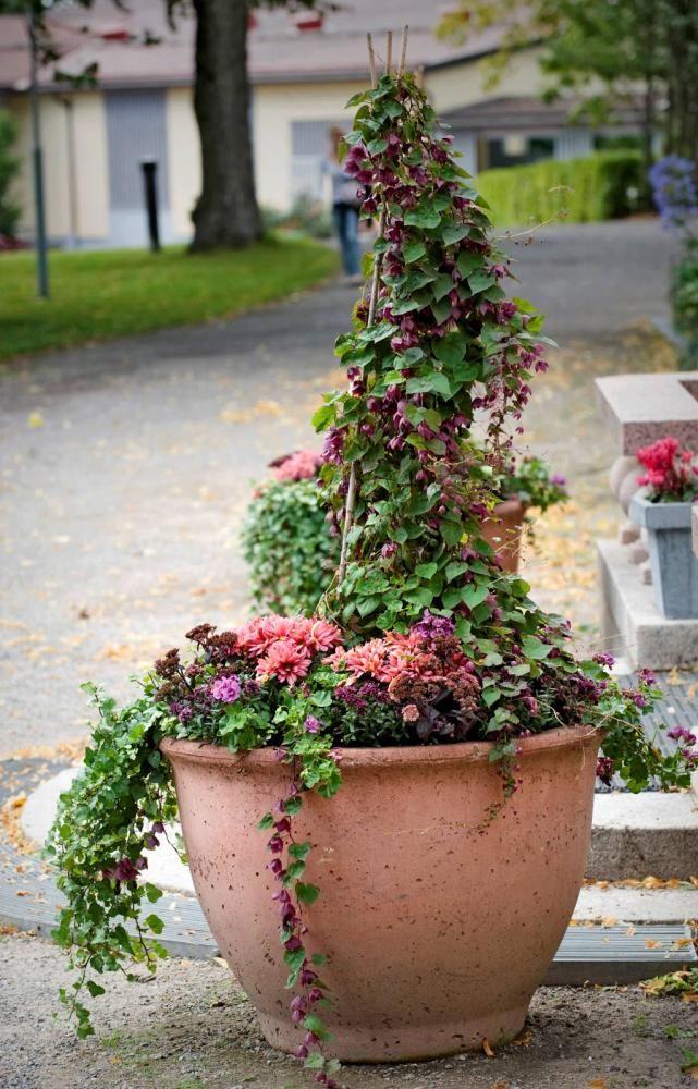 Kesäkukkaistutus uudistuu syyssesongin kasveilla