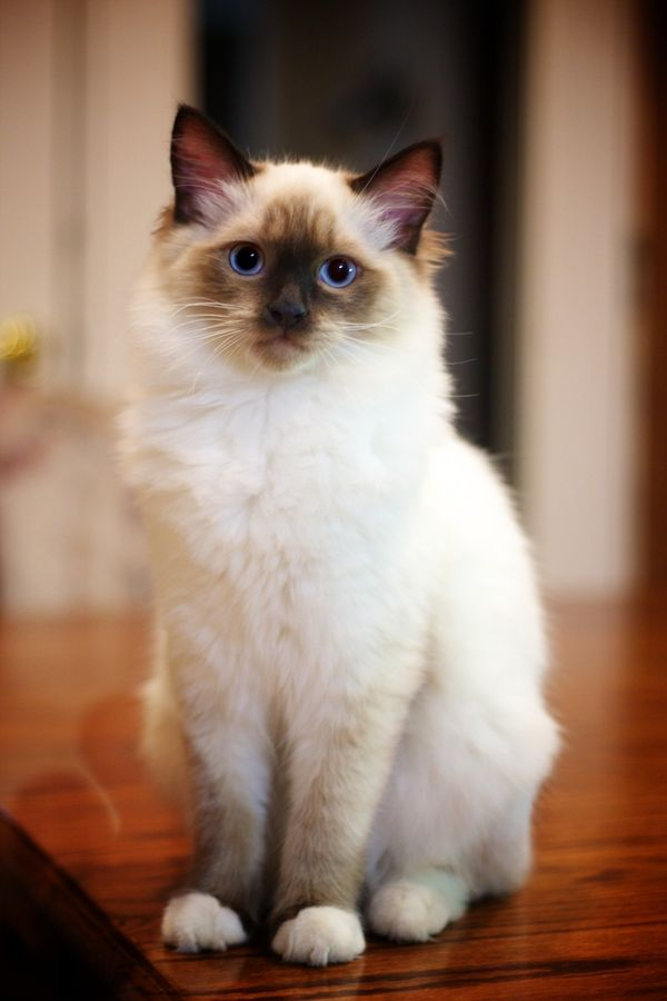 suprized kitten