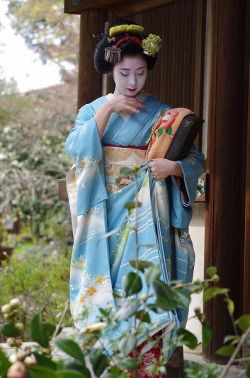 Kimiaya of Miyagawacho as maiko in lovely blue kimono (SOURCE)She's now a geiko - one of the best in her hanamachi!