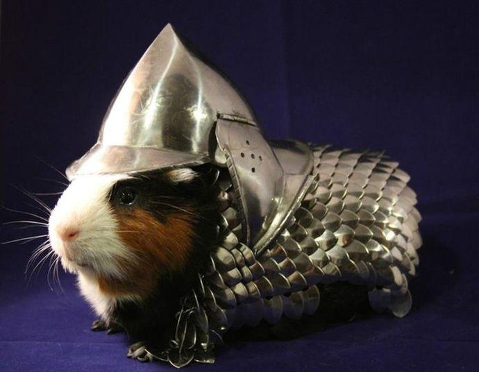 Um porquinho-da-índia mostrou que está pronto para qualquer confronto! Com roupas de guerreiro medieval, o pequeno mostrou que a guerra é sua única inimiga. Quer saber como ele conseguiu vencer a batalha? Veja as fotos!