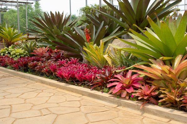 Plantas de jardim: +61 idéias para decorar seu espaço   – jardins / vasos/arranjos/gardens