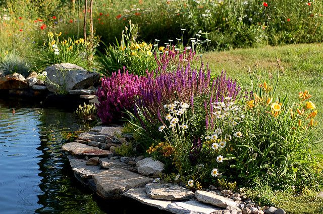 Landscaping around Pond