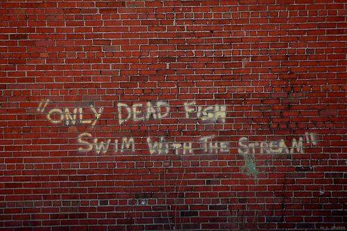 only dead fish swim with the stream: Keep Swim, Fish Swim, Graffiti, Quote, Street Art, Deadfish, Living, Dead Fish, True Stories