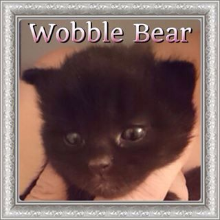 Wobble Bear ADOPTED!