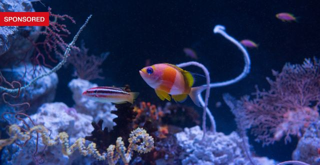 The California Academy of Sciences' NightLife LIVE Series Explores New Depths