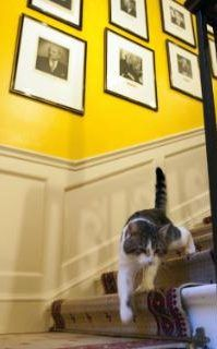 Larry, the new cat for 10 Downing Street, walks down the stairs of the Prime Minister David Cameron's official residence in London, Tuesday, Feb. 15, 2011