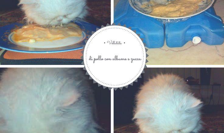 Vellutata di pollo con albume e zucca | Elicats Homemade Petfood