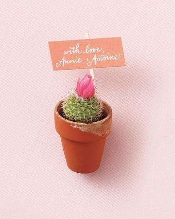 Mini cactus favors in terracotta pots