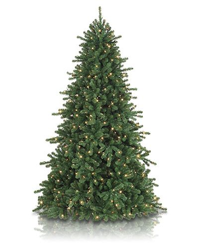 The perfect balance of class and style, the California Douglas Fir features lovely dark green foliage set off by a versatile narrow profile.