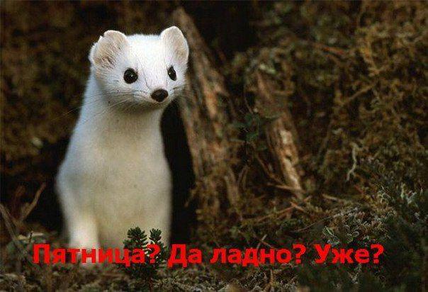"""C пятницей, Друзья! Ваше """"Бизнес Развитие"""" http://brkonsalt.ru"""